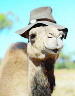 Thumbnail image for Still Looking to Celebrate World Camel Day? Here is your Chance.