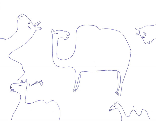 Summer Camel Drawings Submitted by Readers
